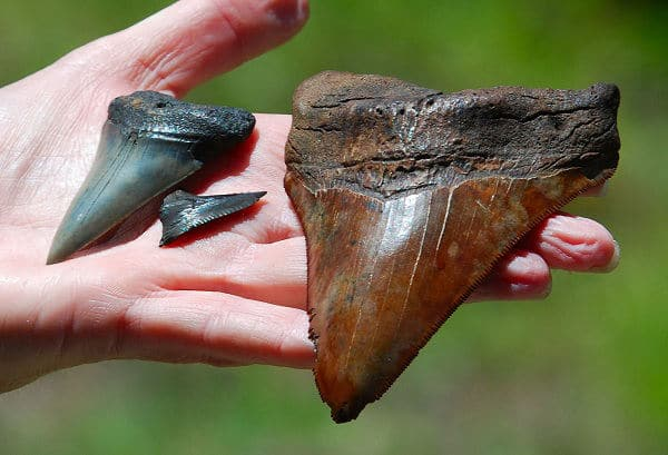 fossil hunting in florida
